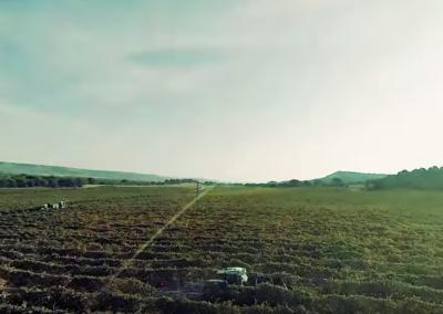 Captura proyecto Marqués de Murrieta | Xperiencia Virtual